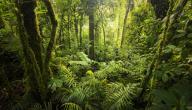 أكبر غابات أفريقيا
