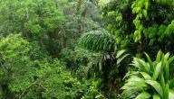 أهمية الغابات المطيرة للأرض