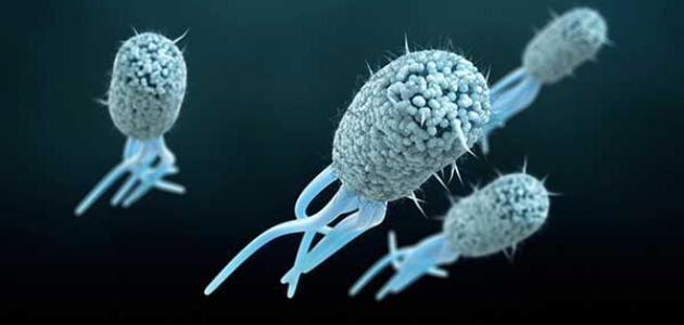 بكتيريا الإيكولاي في البول