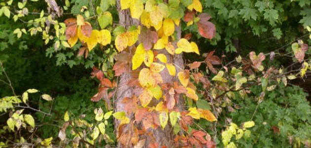 كيف يؤثر الخريف إيجابا على صحتنا؟