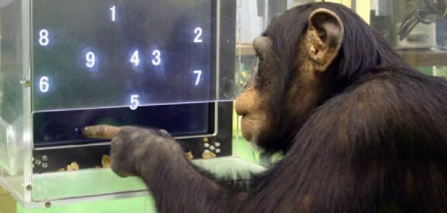 حيوانات تشتهر بالذكاء
