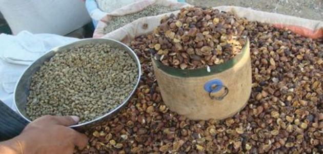 أهمية قشور القهوة في خسارة الوزن