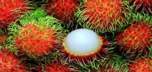فاكهة الرامبوتان و فوائدها للجسم