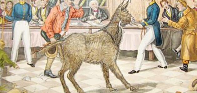 محاكمة الحيوانات في القرون الوسطى