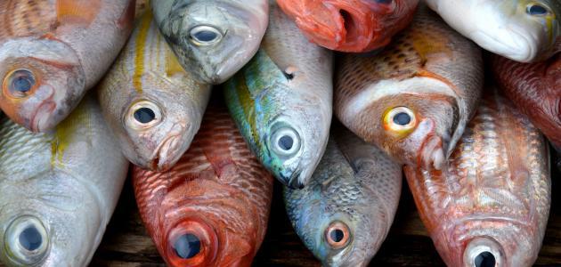 أسماك يجب عدم تناولها