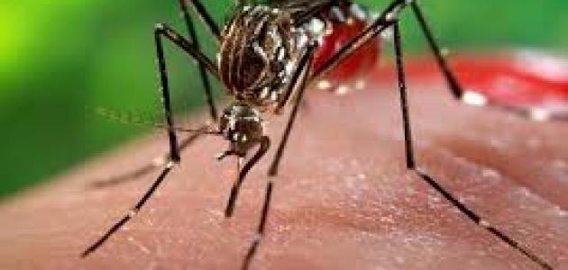 حقائق حول فيروس زيكا
