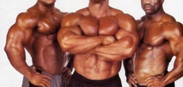 أهم المعلومات عن العضلات