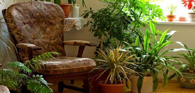 فوائد النافورة في المنزل