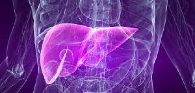 المعدل الطبيعي لانزيمات الكبد