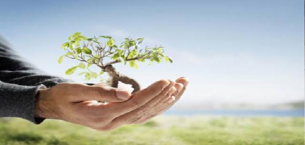 كيفية غرس الأشجار