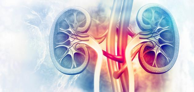 أنواع التهاب الكلى