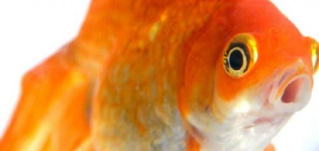 ما أنواع السمك ؟