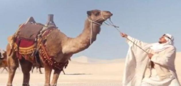 ما أصل العرب