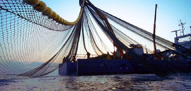 تعريف الصيد الجائر
