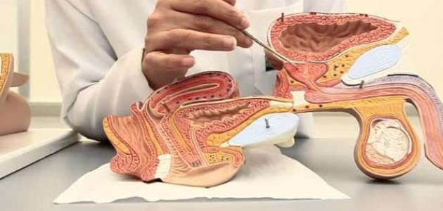 طريقة علاج المثانة العصبية بالأعشاب