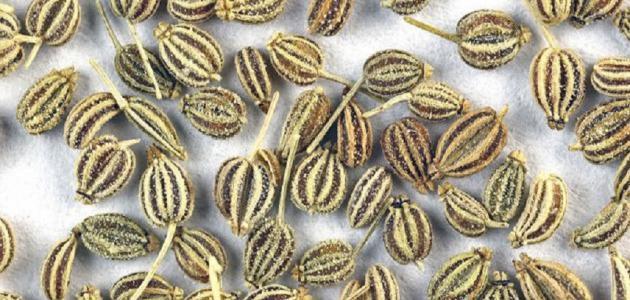 أبرز فوائد بذرة الخلة