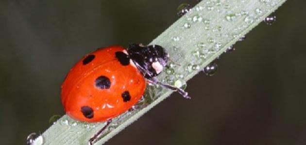 انواع الحشرات النافعة