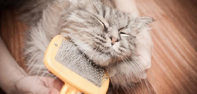 علاج تساقط شعر القطط