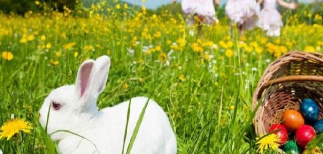 موضوع تعبير عن الربيع