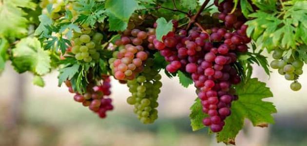 فوائد العنب للجنس
