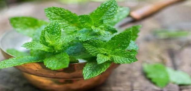 علاج التسمم الغذائي بالأعشاب