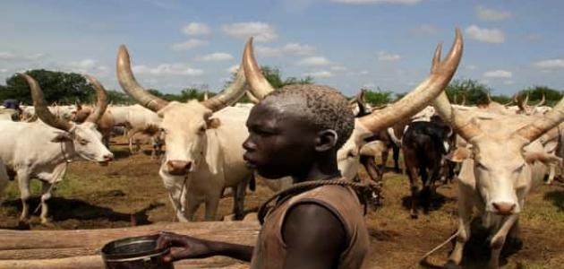 أهمية الثروة الحيوانية في السودان