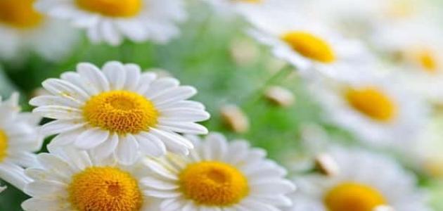 علاج حرقان العين بالأعشاب - موسوعة وزي وزي
