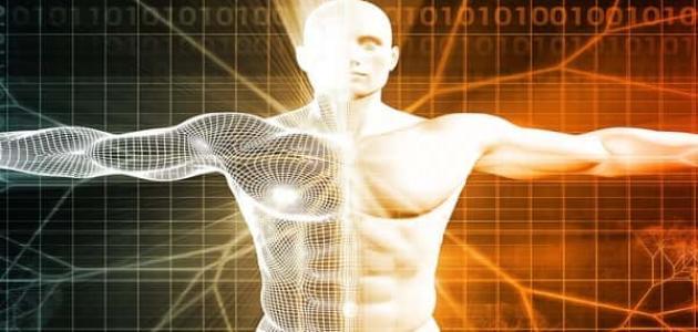 مسارات الطاقة فى جسم الإنسان