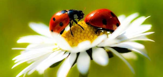 أهمية التنوع الحيوي