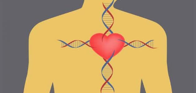 أسباب روماتيزم القلب