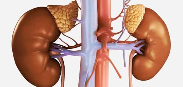 معلومات عن التهاب حوض الكلى