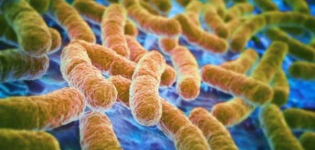 ما هي بكتيريا المعدة