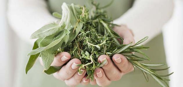 أعشاب تساعد على الحمل بعد الدورة