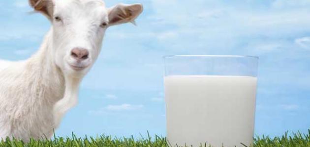 فوائد حليب الماعز