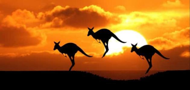 أشهر حيوانات أستراليا