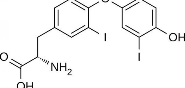 معلومات عن هرمون الثيروكسين