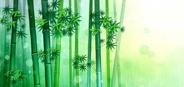 معلومات عن شجرة البامبو