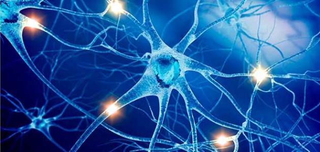 ما هي وظيفة الجهاز العصبي