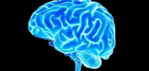 ما هي مكونات الدماغ