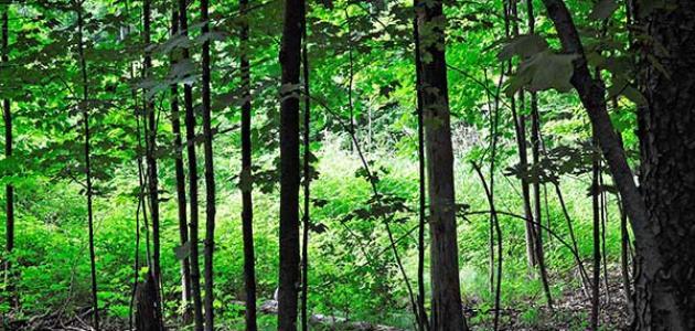 أنواع الغابات