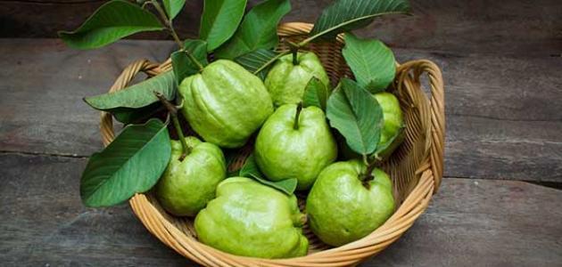 فوائد ورق الجوافة للكحة