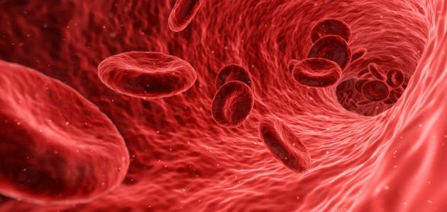 الأوعية الدموية وأمراضها