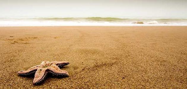 فوائد الرمل للجسم
