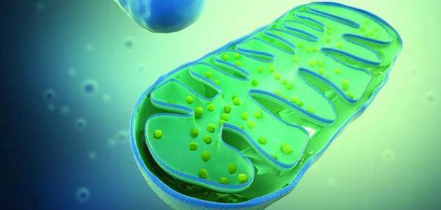 مكونات الخلية النباتية