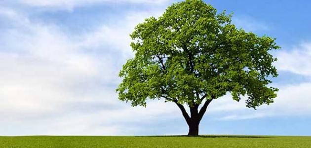 الشجرة وأثرها في التوازن البيئي %D9%85%D9%88%D8%B6%D9%88%D8%B9_%D8%B9%D9%86_%D8%A7%D9%84%D8%B4%D8%AC%D8%B1%D8%A9_%D9%88%D8%A3%D8%AB%D8%B1%D9%87%D8%A7_%D9%81%D9%8A_%D8%A7%D9%84%D8%AA%D9%88%D8%A7%D8%B2%D9%86_%D8%A7%D9%84%D8%A8%D9%8A%D8%A6%D9%8A