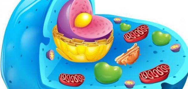 ما هي مكونات الخلية