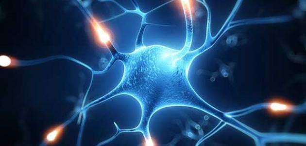 تركيب الخلية العصبية