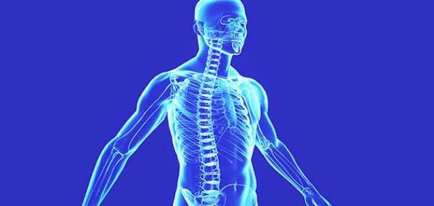 وظائف الخلايا في جسم الإنسان
