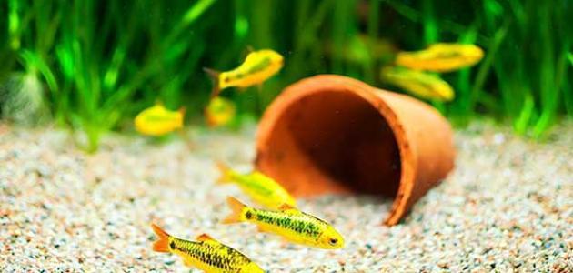 نصائح عند شراء حوض السمك المنزلي