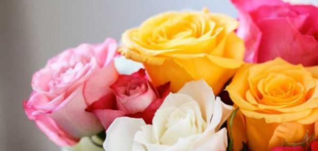 ما هي أسماء الأزهار